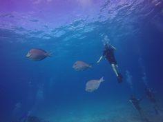 Caribbean Coral Reefs, Philip Forsdik