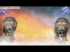 Birthday background edited with lion vfx - YouTube Green And Black Background, Green Background Video, Green Screen Video Backgrounds, Anime Backgrounds Wallpapers, Photo Backgrounds, Lion Background, Background Wallpaper For Photoshop, Banner Background Images, Background Pictures