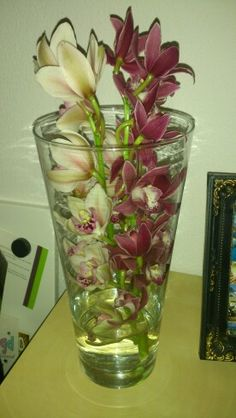 Orchids (real)