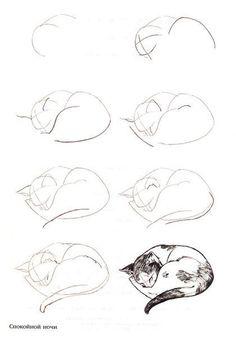 Como dibujar gatos (4)