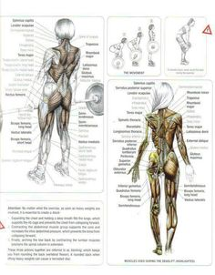 which muscles work in deadlift - Google Search