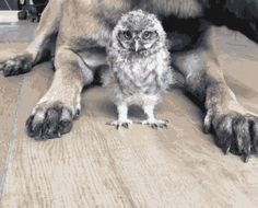 Owl and dog. [video] (@tanja_brandt)