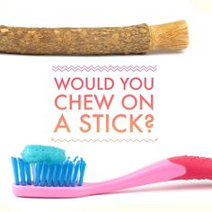 Did you know that toothbrushes date back to ancient Egypt? Well they didnt exactly use the toothbrushes we know today. Instead they chewed on soft sticks to clean their teeth and used a sharpened end as a toothpick to clean food from between their teeth! These ancient toothbrushes were aptly named chewsticks. #NowYou Know #DentalHistory - Happy Little Chompers | Fairfield CA | http://www.happylittlechompers.com/