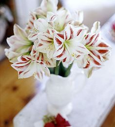 For your Christmas decor, incorporate an amaryllis bouquet.