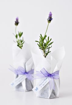 Do you need help planning your wedding? These wedding articles have guides and news covering every subject. Lavender Cottage, Lavender Blue, Lavender Fields, Lavender Flowers, Plant Wedding Favors, Small Plants, Simple Weddings, Floral Arrangements, Cactus