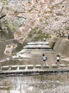 Todays Japan Photo: Spring of Life