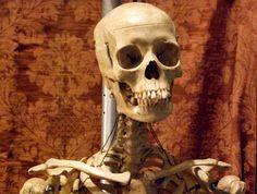 30cm human female model anatomy skull head muscle bone medical, Skeleton