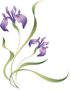 """Photo from album """"Разные красивые"""" on Yandex. Adriana Rodrigues, Album Design, Views Album, Iris, Blog, Plants, Image, Beautiful, Yandex"""