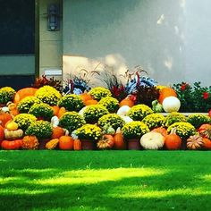 Hello October 🎃 Fabulous front door decor for festive and tasteful curb appeal on the blog today. #fall #falldecor #pumpkins #frontyard #landscape #thepottedboxwood