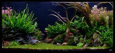 Le Jardin d'Émeraude par Fasciatum #aquascaping #aquarium #fishtank