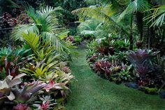 bromeliads in the garden southern california - Google Search