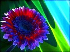207 Meilleures Images Du Tableau Fleurs Exotiques Exotic Flowers