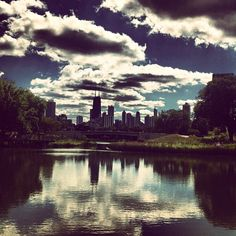 Chicago skyline view from the Lincoln Park Zoo. #chicago #chicagoskyline #lincolnparkzoo