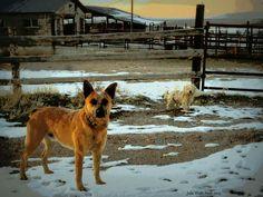 Oak  City , Utah  watch dogs