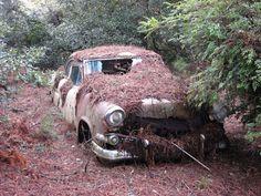 Wrecked Car In Wood Near Strathyre Scotland