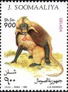 Stamp: Celada (Somalia) (Monkeys) Mi:SO 522 Horn Of Africa, Postage Stamp Art, Somali, Fauna, Primates, Monkeys, Chairs, Postage Stamps, World
