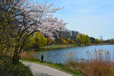 High Park - I've always been fascinated by the legend of Grenadier Pond.