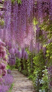 purple fringe...