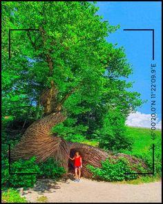 Leggi la mia guida alle opere. Scopri come riceverla gratis qui Country Roads, Italia, Art
