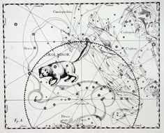 Ursa Minor constellation from Uranographia by Hevelius, 1690. In Hungarian mythology the constellation is called 'Little Goncol cart' (Göncöl szekér) after a legendary shaman. (Ursa Major is 'Big Goncol cart.') The shaman's knowledge knew no limit. He invented the cart: His nation was wandering, so the cart was the biggest gift of the Gods to the country. Legends claim he knew everything about the world. Nobody saw his death; his body simply disappeared among the stars.
