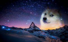 http://www.fanaru.com/doge/image/18352-doge-only-doge-without-text.jpg