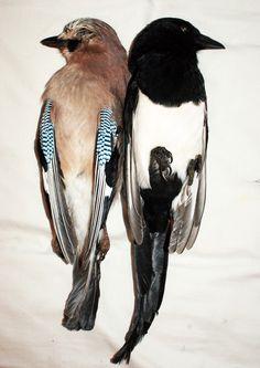 dead birds, beautiful photography