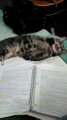 He's helping me with my final exams... At least, he's trying to - 9GAG