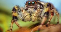 Although some may wish it so, a world without spiders would be a miserable place.