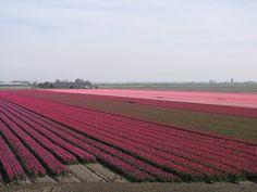 Oude-Tonge, The Netherlands 2010 van Vanderbaan-MJ op de 15 February 2011