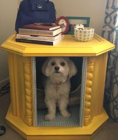 Penny in her upcycled little dog bed getaway! A DIY project with my daughter using a old drum type table. Little Dogs, Dog Bed, Drum, Upcycle, Daughter, Diy Projects, Concept, Type, Chic
