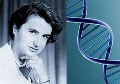 Rosalind Franklin is the forgotten woman behind the discovery of the double helix structure of DNA. James Watson, Alfred Nobel, Last Will And Testament, Prix Nobel, Dna Model, Nobel Prize Winners, List Of Questions, Working Mother, Women In History