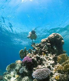 The shores of Aqaba surprisingly boasts a vibrant, colourful reef that is fantastic for diving and snorkelling. Jordan literally has it all!
