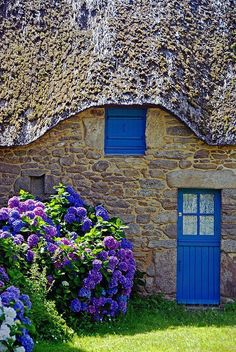 blue door and blue Hydrangea