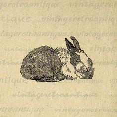 Digital Angora Rabbit Printable Download by VintageRetroAntique