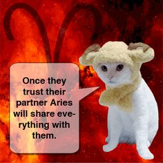 www.astroconnects.com #astrology #horoscope #zodiac #cat #cats #compatibility #love #catinspace #catsinspace #astrocats #aries