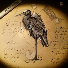 20170304 Heron Psdelux by psdeluxe.deviantart.com on @DeviantArt