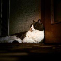 うちのニャン #ペット #pet #猫 #cat