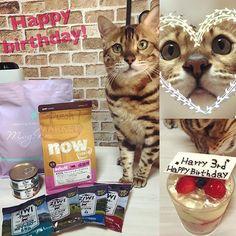 Happy 3rd birthday🎂🎉 Our sweet cat Harry🐱 Hope this year brings you lots of happiness and good health.I love you' Harry🐱😘😘 今日はハリーの3歳のお誕生日‼︎ 驚くほど穏やかで優しくて甘えん坊王子♡ ハリー君。 食事の好き嫌いを もう少し直してくれると助かるのだけど… この1年も健康で幸せな毎日を過ごそうね‼︎ ハリーと巡り逢えたこと、家族になれたこと、 たくさんの人に感謝です。 可愛いハリー 3歳のお誕生日おめでとう(*´꒳`*) 🎉🎂❤️ #bengal #bengalcat #bengallove  #bengallife #mybengal #bengalworld  #bengallove #mylovecat #happy3rd  #3rdcat #brownspotted #brownspottedtabby  #happybirthday #mycatmylife #happycat  #ベンガル #ベンガルキャット…