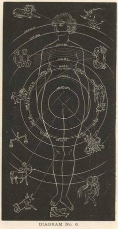 The above diagram gives a combined expression of the relation which the signs of the zodiac sustain to the different portions of the body, and also of the natural position and relation of the seven planets to the seven vital functions of the system. The form of woman is selected, as being the mother principle and mould of all things.