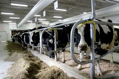#UWMadison will dedicate refurbished Dairy Cattle Center March 9