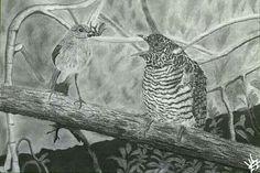 J.L.F.I. Natural Art. Interacción de especies.  Carricero común alimentando a un joven pájaro cuco. Drawing by: *Jose Luis Fdz Infantes*. @ jlfi.artenatural