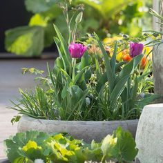 Pallekarm: Slik lager du enkelt pene og praktiske opphøyde bed - Moseplassen Den, Plants, Plant, Planets