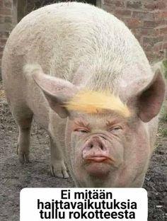 Hr Giger Art, Good Jokes, Quotations, Lol, Humor, Memes, Funny, Animals, Nursing