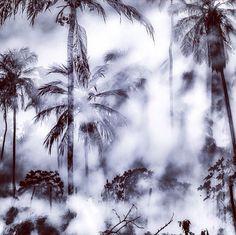 Misty by Dante Laurini Jr