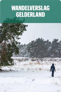 Wandelverslag Wolfhezerheide in Gelderland. Wandelen. Winterwandelen. Reisverslag. Hiking, Group, World, Outdoor, Instagram, Walks, Outdoors, The World, Outdoor Games