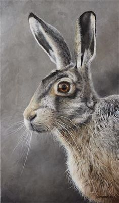 "Clive Meredith Wildlife Art: Brown Hare 17"" x 10"" oil on canvas"