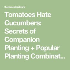 Tomatoes Hate Cucumbers: Secrets of Companion Planting + Popular Planting Combinations   Homestead Guru