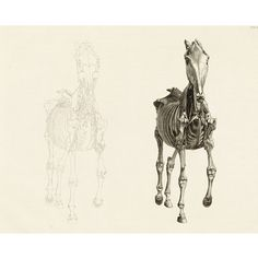 The Anatomy of the Horse - Front 3, George Stubbs at British Museum shop online