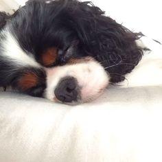 Como acordar seu cachorrinho