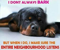 A rotti doesn't just bark at anything. They are great watch dogs. I love their big deep bark.